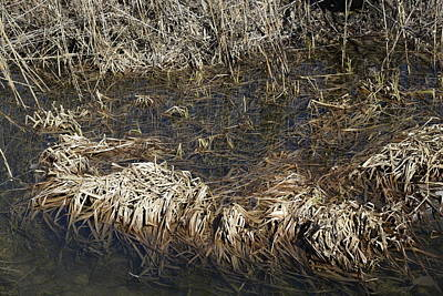 Dried Grass In The Water Poster