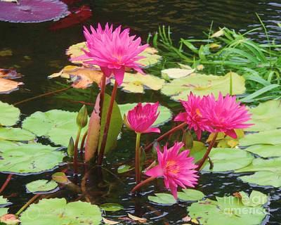 Water Lilies 008 Poster by Robert ONeil