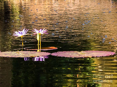 Water Lilies And Bubbles Poster