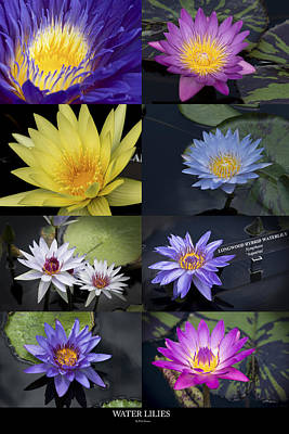 Water Lilies Poster by Phil Abrams