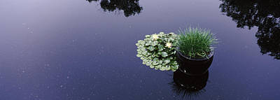 Water Lilies With A Potted Plant Poster by Panoramic Images