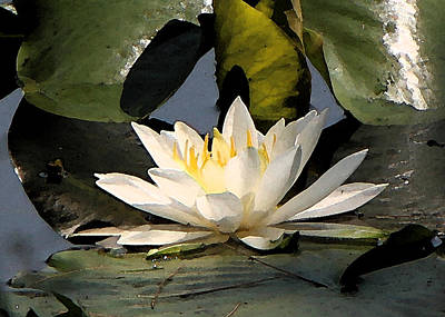 Poster featuring the photograph Water Lilly by Jim Baker