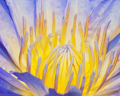 Water Lilly Poster by Robert Culver