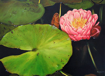 Water Lily Poster by Alexandra Louie