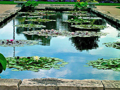 Poster featuring the photograph Water Lily Garden by Zafer Gurel