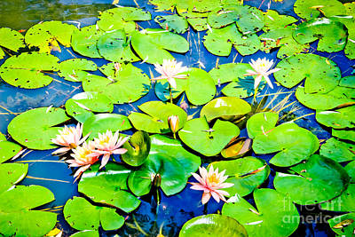 Water Lily Pond Poster by Colleen Kammerer