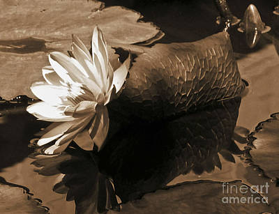Water Lily Pond Sepia Toned Photo Poster by Carol F Austin