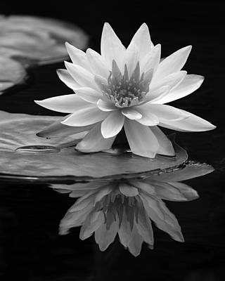 Water Lily Reflections I Poster by Dawn Currie