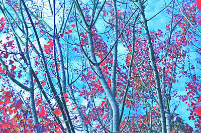Poster featuring the photograph Watercolor Autumn Trees by Tikvah's Hope