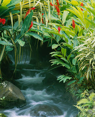 Waterfall In A Forest, Tabacon, Costa Poster by Panoramic Images