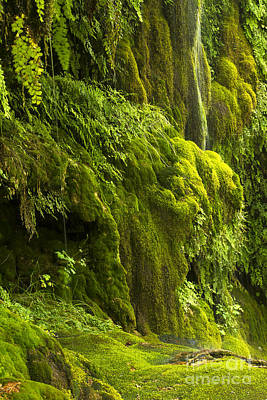 Poster featuring the photograph Waterfall In Green by Bryan Keil
