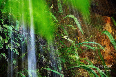 Waterfall Over Ferns Poster by Kaye Menner