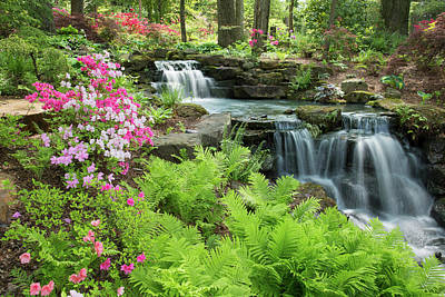 Waterfall With Ferns And Azaleas Poster