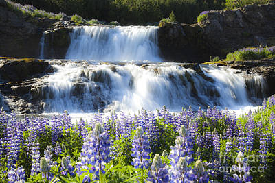 Waterfall With Flowers Poster