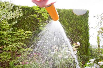 Watering With A Garden Hose Poster by Ashley Cooper