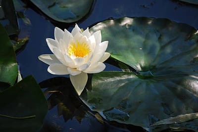Poster featuring the photograph Waterlily by Janis Knight