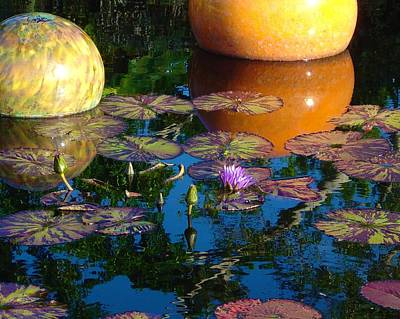 Waterlily Reflections Poster