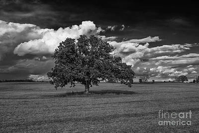 Weathered Oak Poster