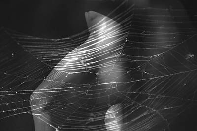 Web Of Legs Poster by Deprise Brescia