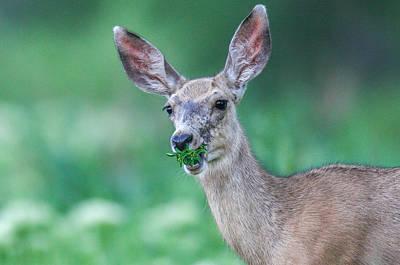 Weed Deer Poster