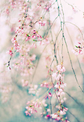 Weeping Cherry Blossoms Poster by Jessica Jenney