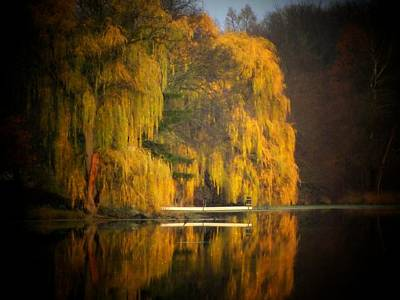 Weeping Willow Pier Poster