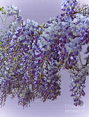 Weeping Wisteria Poster