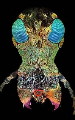 Weevil Head, Confocal Micrograph Poster by Science Photo Library