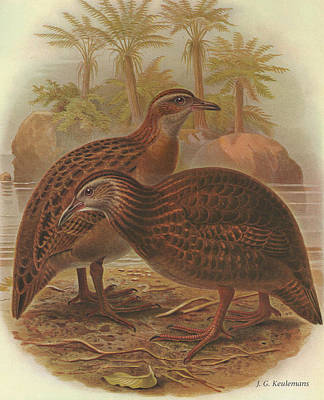 Weka Poster by Dreyer Wildlife Print Collections