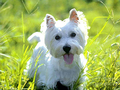 West Highland White Terrier Painting Poster by Marvin Blaine