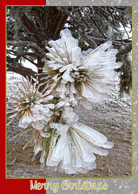 Western Themed Christmas Card Pine Needles And Ice Poster by Amanda Smith