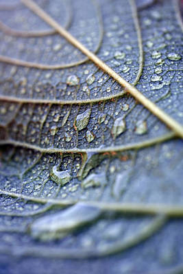 Wet Leaf Poster by Frank Tschakert