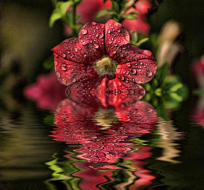 Wet Petunia Poster