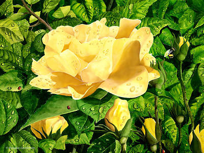 Wet Yellow Rose Poster