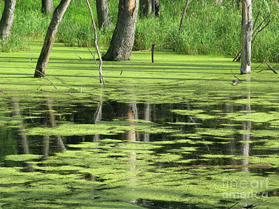 Wetland Reflection Poster by Ann Horn