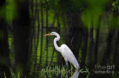 Wetland Wader Poster