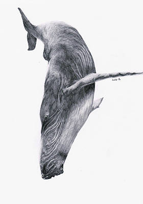 Poster featuring the drawing Whale by Lucy D