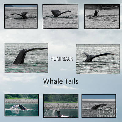 Whale Tails Poster by Robert Bales