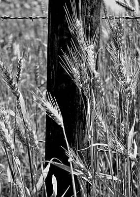 Poster featuring the photograph Wheat And Fence Post by Ellen Tully
