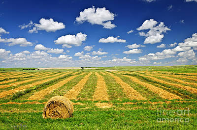 Wheat Farm Field And Hay Bales At Harvest In Saskatchewan Poster