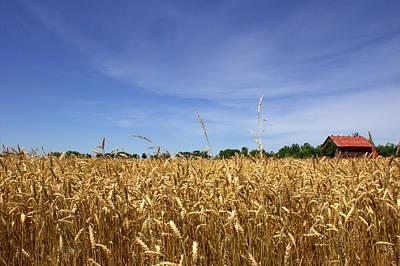 Wheat Field II Poster