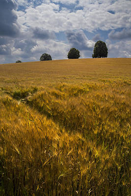 Wheat Fields Poster by Debra and Dave Vanderlaan