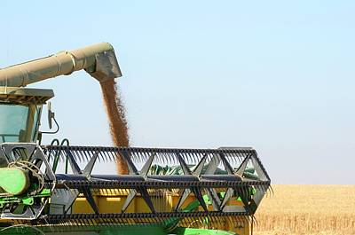 Wheat Harvesting Poster by Photostock-israel