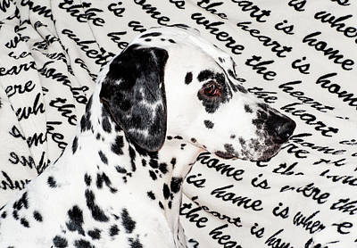 Where The Heart Is Home Where The Heart Is. Kokkie. Dalmation Dog Poster by Jenny Rainbow