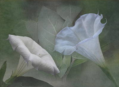 Whispers Of Angel Trumpet Datura Poster by Angie Vogel