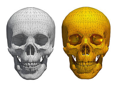 White And Golden Skull  Poster by Thanes