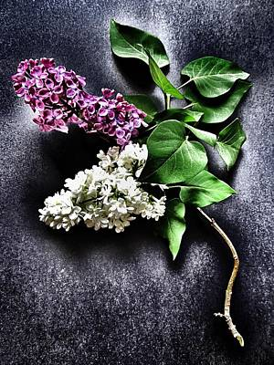 White And Purple Lilacs Poster by Marianna Mills
