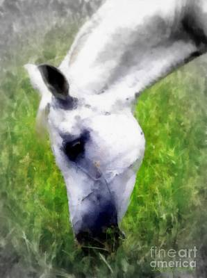 White Arabian Horse Grazing Poster by Janine Riley