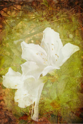 Poster featuring the photograph White Azalea by Judy Hall-Folde