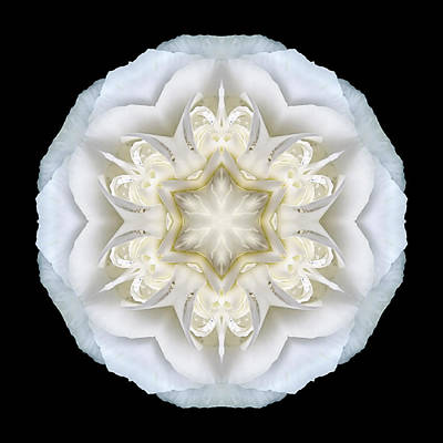 White Begonia II Flower Mandala Poster